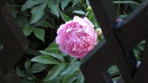From the gardens at Sweet Briar College, Virginia 2014