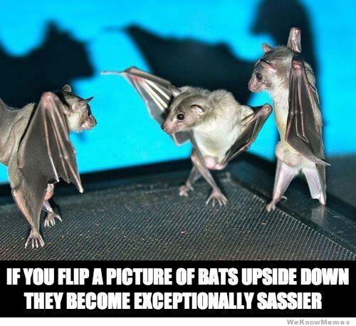 Source: http://weknowmemes.com/2013/09/sassy-bats/